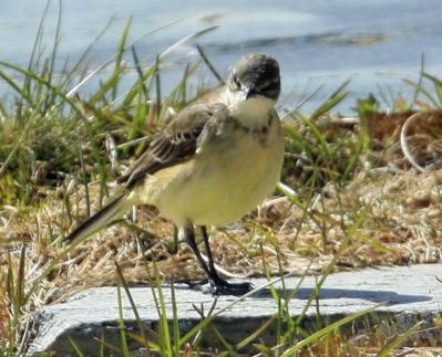 fugl med langt tynt nebb